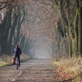 Puszcza Zielonka, rowerzysta jadący przez las